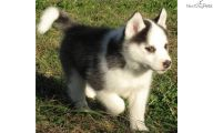 Funny Female Puppy Names 2 Background