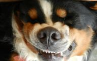 Funny Female Puppy Names 4 Free Wallpaper