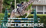 Funny Horse Fails 18 High Resolution Wallpaper