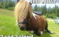Funny Horse Fails 2 Cool Wallpaper