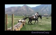 Funny Horse Fails 25 Hd Wallpaper