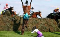 Funny Horse Fails 7 Hd Wallpaper