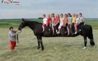 Funny Horse Riding Fails 1 Hd Wallpaper