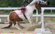 Funny Horse Riding Fails 12 High Resolution Wallpaper