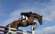 Funny Horse Riding Fails 17 Background Wallpaper