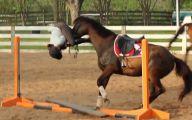 Funny Horse Riding Fails 4 Desktop Wallpaper