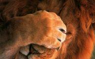 Funny Lions 11 Desktop Wallpaper