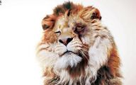 Funny Lions 15 Widescreen Wallpaper