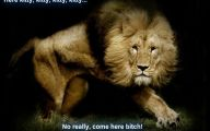 Funny Lions 23 Background Wallpaper