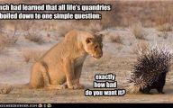 Funny Lions 34 Desktop Background