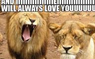 Funny Lions 42 Cool Wallpaper