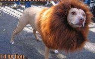 Funny Lions 9 Free Wallpaper