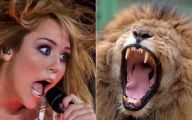 Funny Miley Cyrus Celebrity 29 Desktop Background
