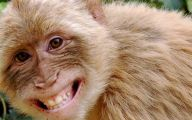 Funny Monkey Tattoo 26 Desktop Background