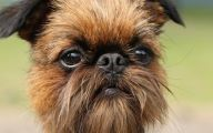 Funny Odd Dog Breeds 12 Wide Wallpaper