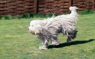 Funny Odd Dog Breeds 4 Wide Wallpaper