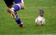 Funny Soccer Fails 2 Free Hd Wallpaper