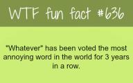 Funny Weird Facts 39 Desktop Background