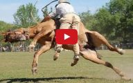 Horse Bloopers Funny 17 Widescreen Wallpaper