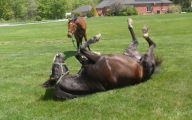 Horse Bloopers Funny 21 High Resolution Wallpaper