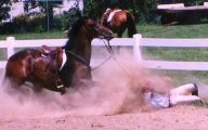 Horse Bloopers Funny 27 High Resolution Wallpaper