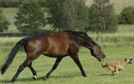 Horse Bloopers Funny 7 Wide Wallpaper