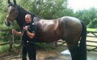 Horse Fail Photos 22 High Resolution Wallpaper