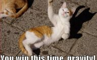 Lolcats 10 Widescreen Wallpaper