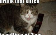 Lolcats 11 Cool Wallpaper