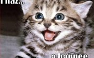 Lolcats 28 Hd Wallpaper