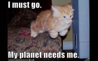 Lolcats 34 Widescreen Wallpaper