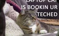 Lolcats 4 Widescreen Wallpaper