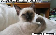 Lolcats 7 Desktop Wallpaper