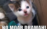 Lolcats 61 Hd Wallpaper