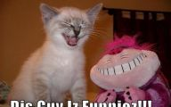 Funny Pictures With Captions 8 Cool Hd Wallpaper