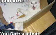 Lolcats 68 Cool Hd Wallpaper