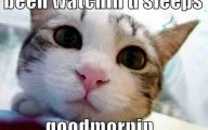 Lolcats 69 Hd Wallpaper