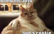 Lolcats 75 Free Hd Wallpaper
