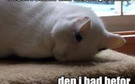 Lolcats 79 Desktop Wallpaper