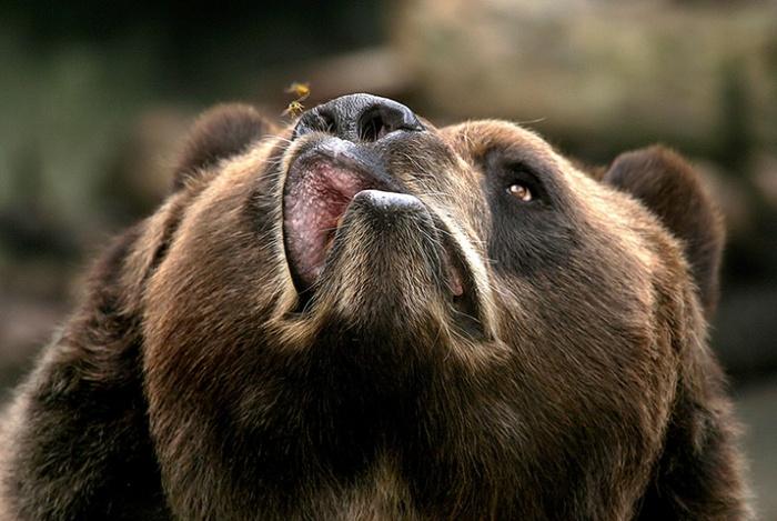 ugly bear