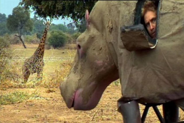 Funny African Animals 12 Desktop Wallpaper