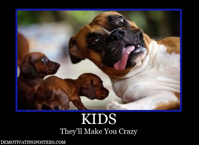 Funny And Crazy Dogs 6 Background Wallpaper