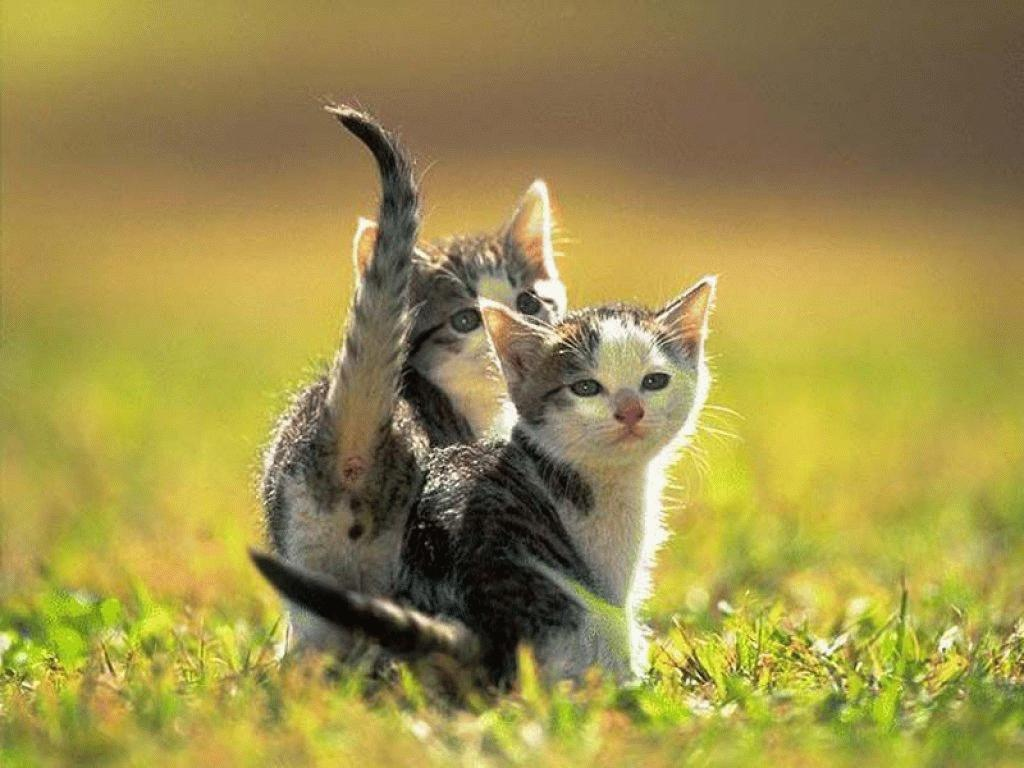 Funny and cute animals 35 desktop background - Funny animal wallpapers ...