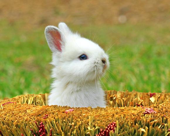 pics photos cute animal widescreen wallpaper