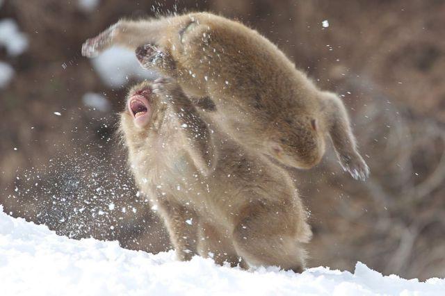 Funny And Cute Animals 9 Desktop Wallpaper