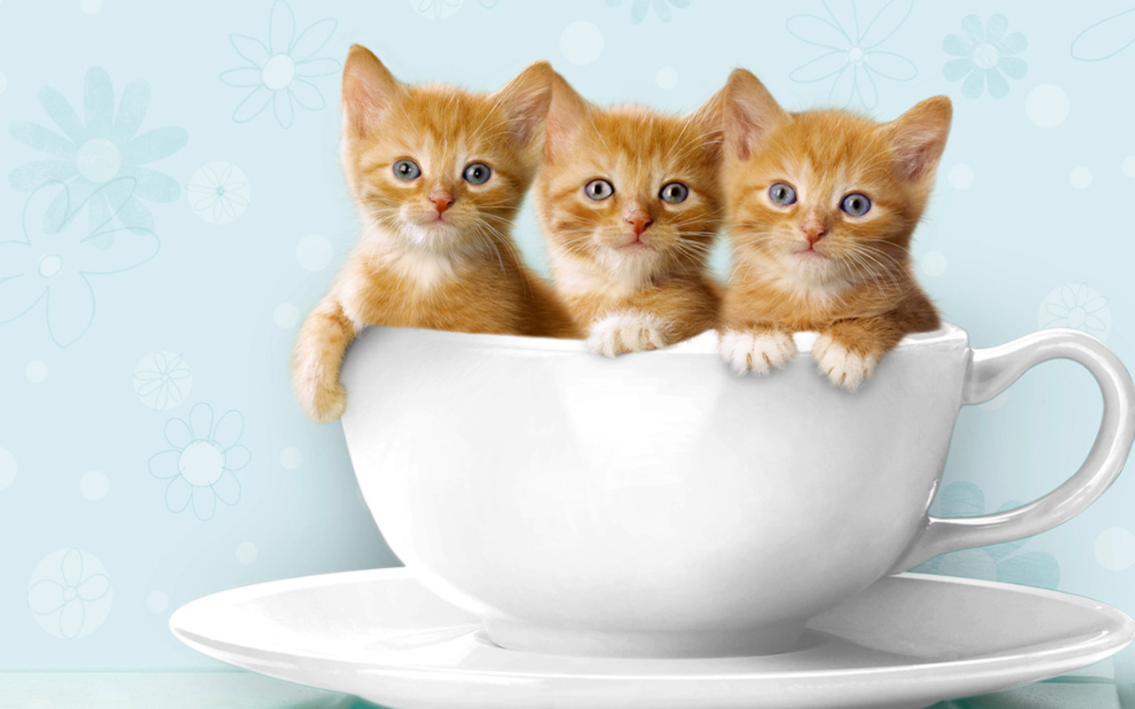 Cute Funny Backgrounds: Funny And Cute Cat Pictures 21 Background