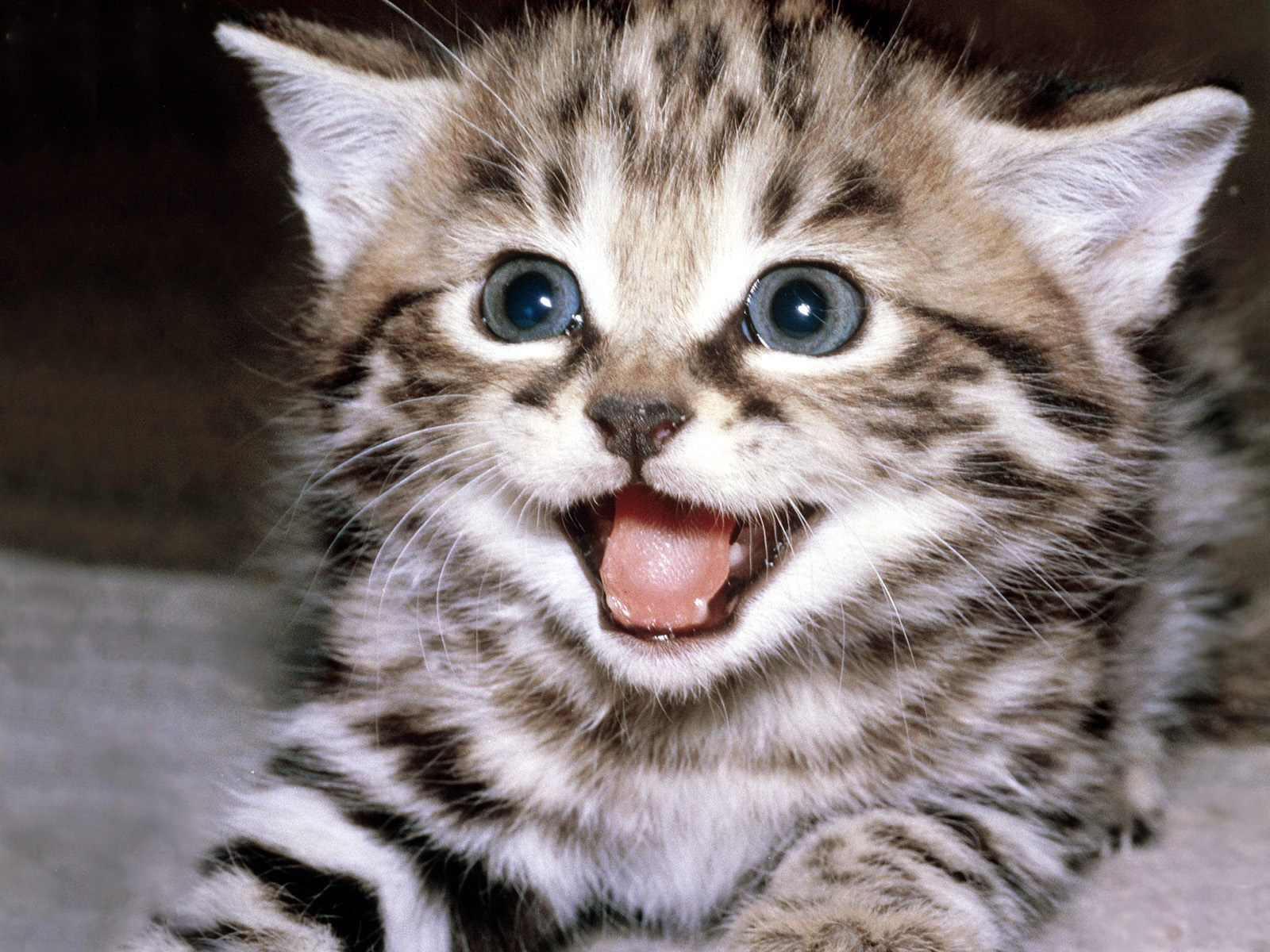 Funny And Cute Cat Pictures 21 Background