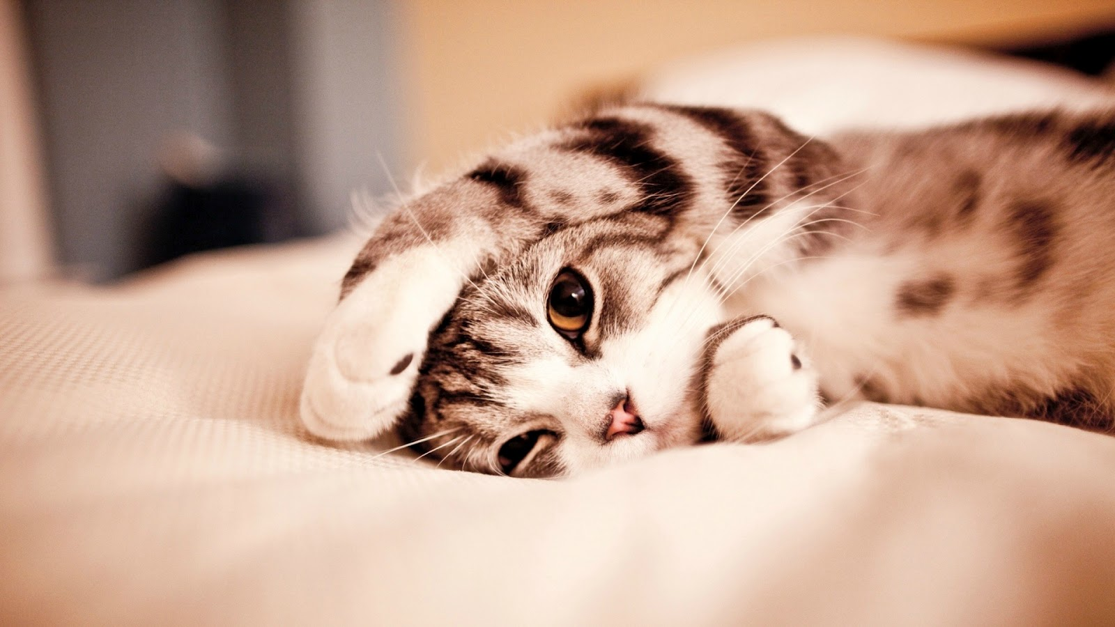 Funny And Cute Cats 10 Hd Wallpaper