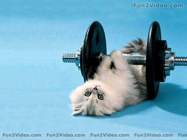 Funny And Cute Cats 3 Hd Wallpaper