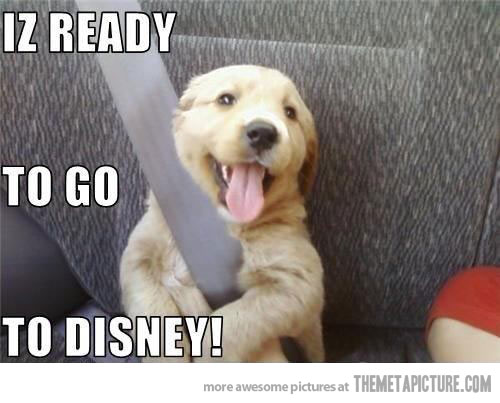 Download Funny Canine Adorable Dog - funny-and-cute-dog-pictures-25-background  Graphic_469497  .jpg